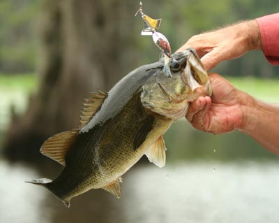 072910-LargemouthBass