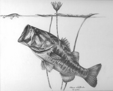 pencil_bass-_lilly_pads1